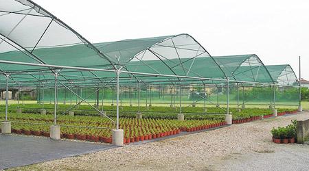 Importancia de utilizar malla sombra en cultivos   Plastimallas M�xico